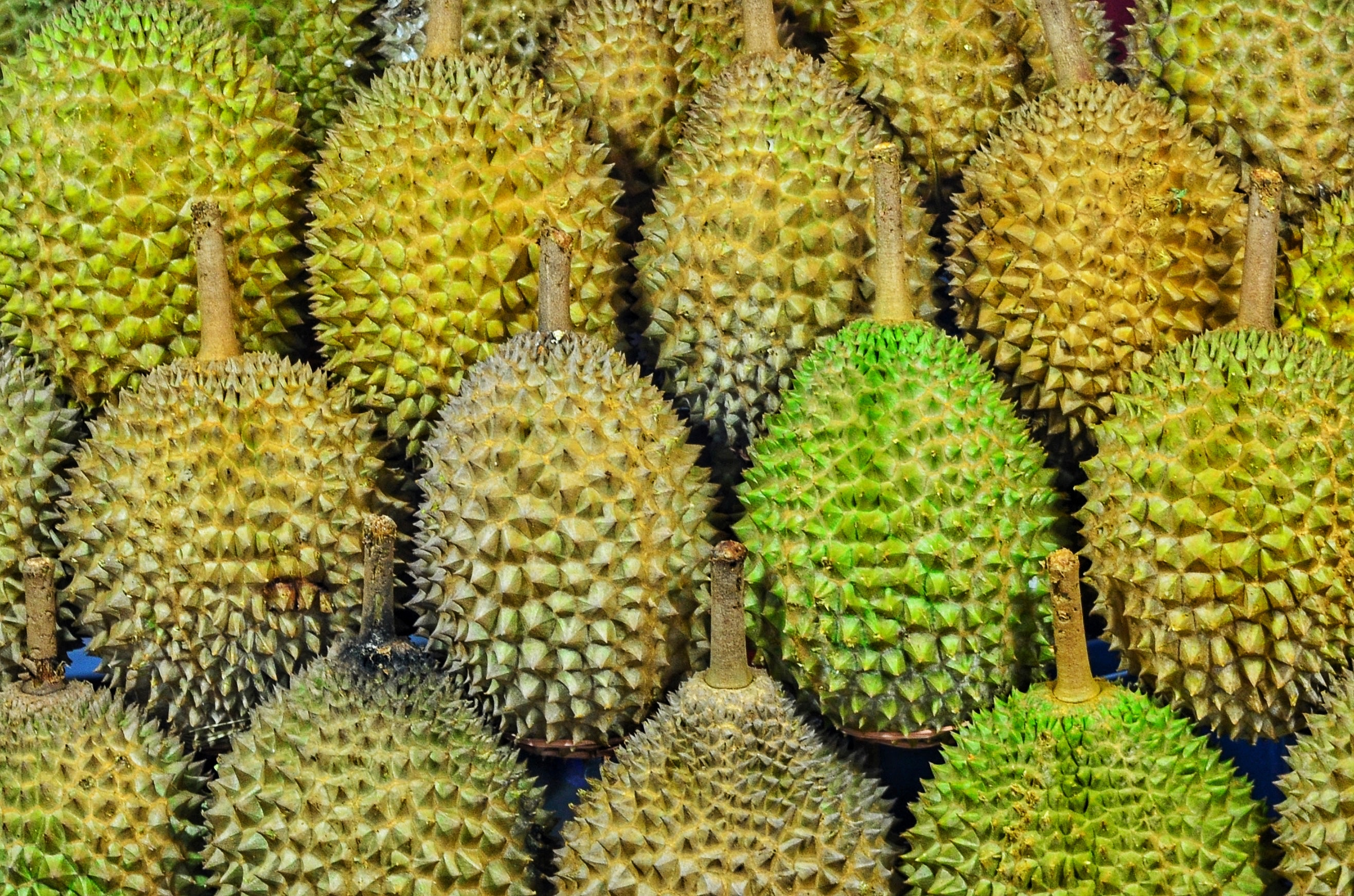Johor — Seeking a Big Hit in a New Breed of Durian