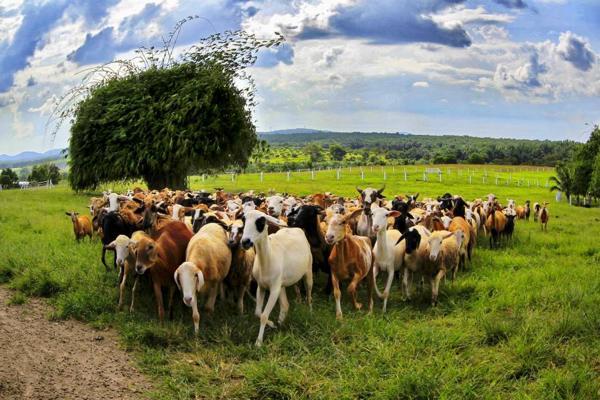 UK Farm Agro