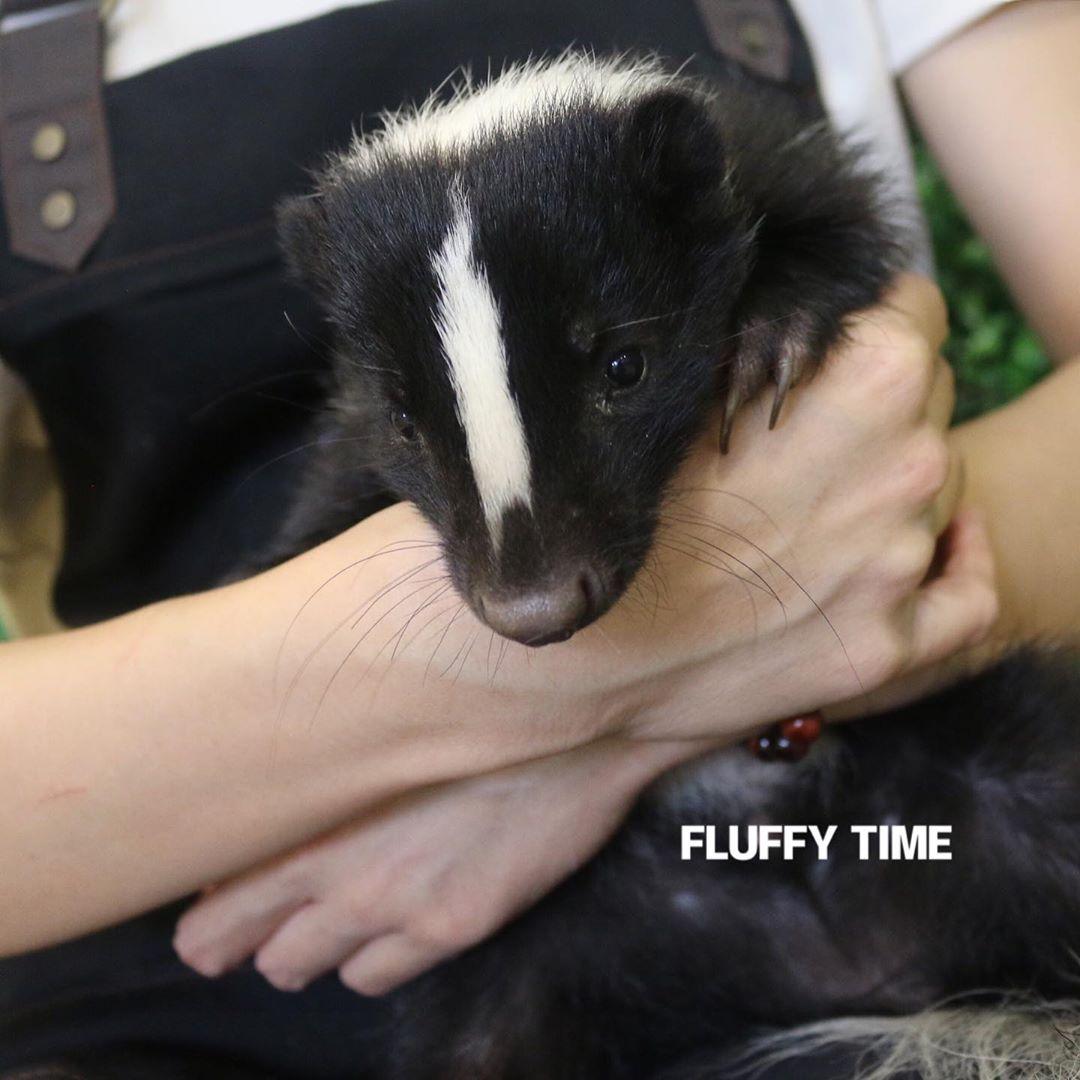 Fluffy Time The Animal Cafe Johor