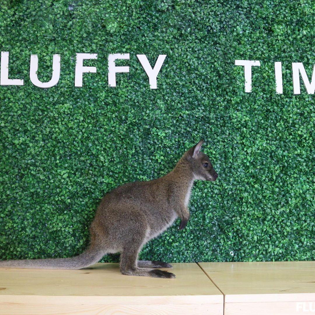 Fluffy Time Johor Bahru